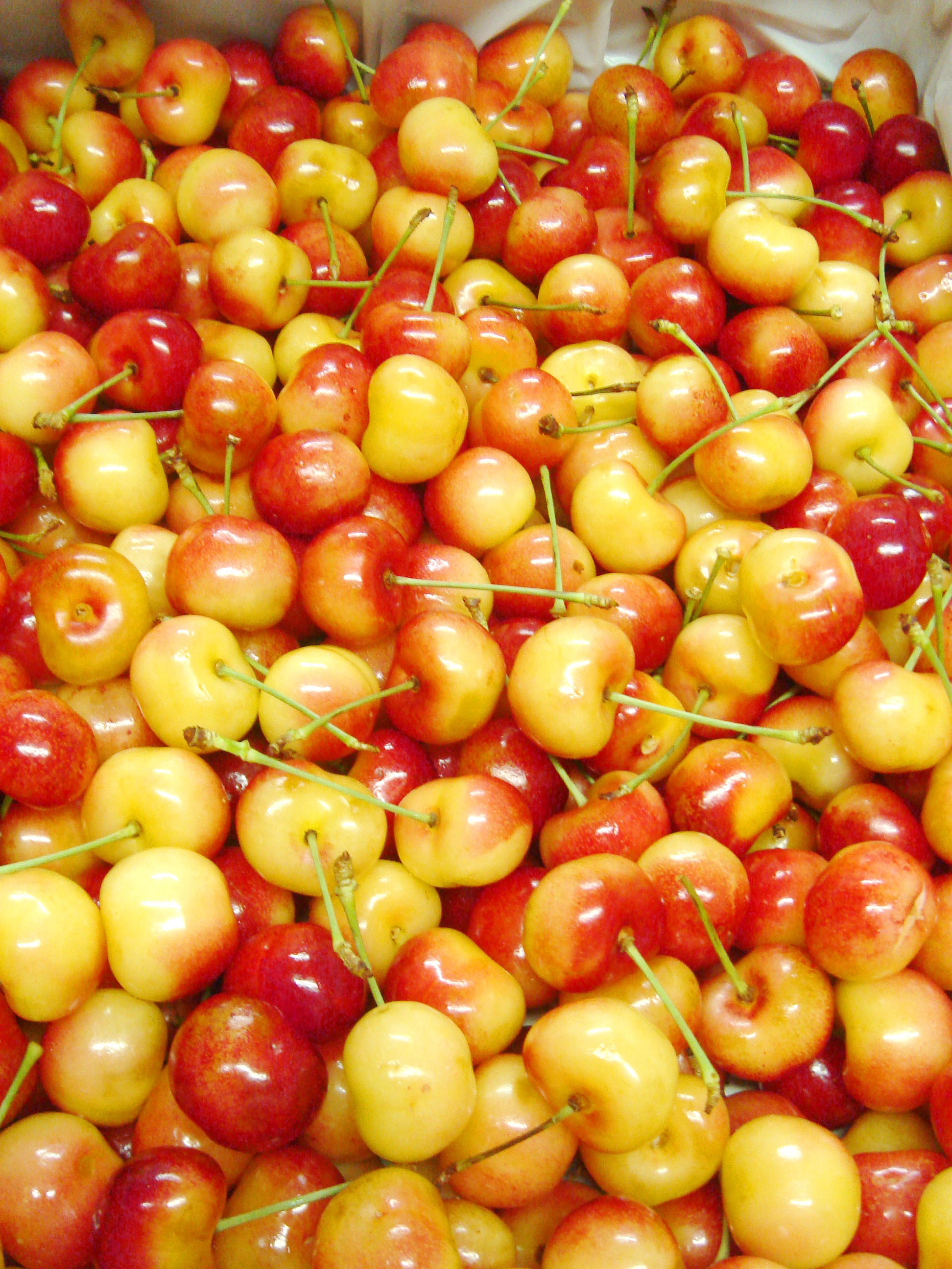 USA-Rainier Cherry