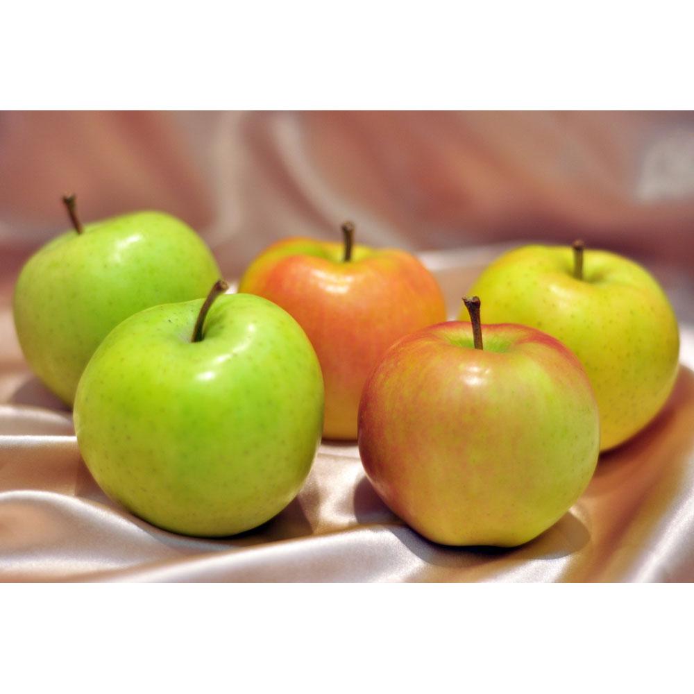 Aomori Toki Apple