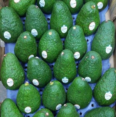 Mexico- Hass avocado (24/30/35pcs)