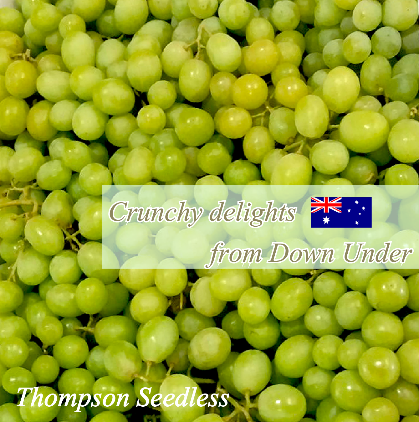 Australian Thompson Seedless grapes