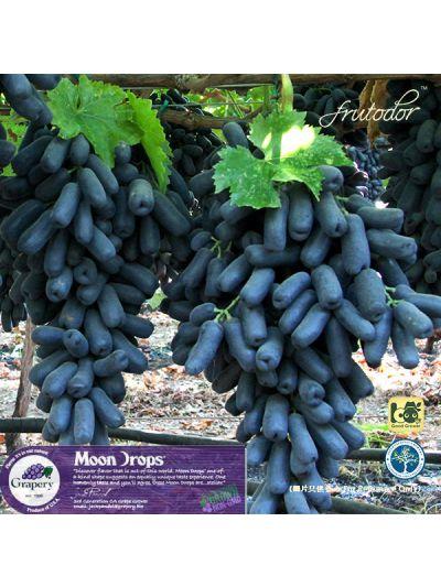 USA California  Moon Drops® Seedless Black Grapes (4Packs/9.5lbs)